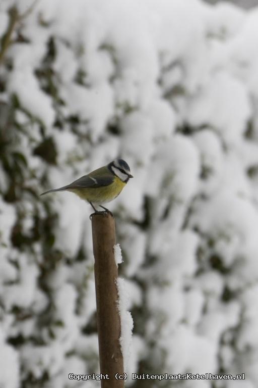 sneeuw 27-02-2013_0.jpg