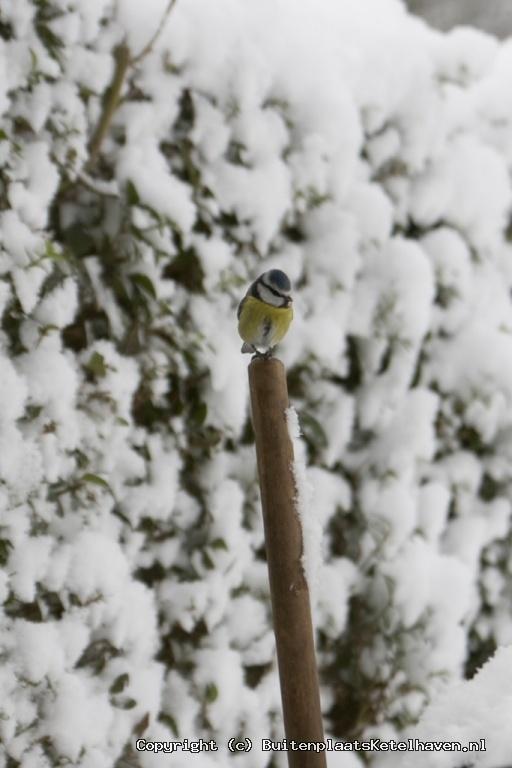 sneeuw 27-02-2013_3.jpg