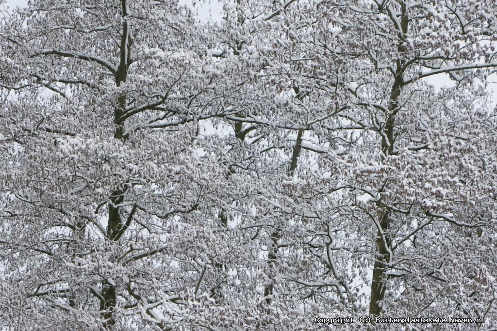 sneeuw 27-02-2013_7.jpg