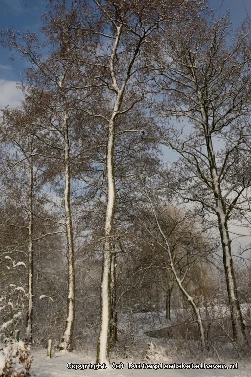 sneeuw 27-02-2013_22.jpg