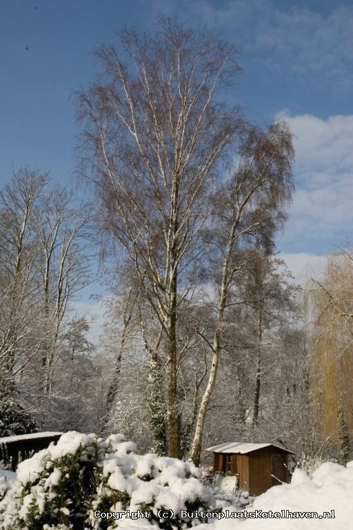 sneeuw 27-02-2013_40.jpg