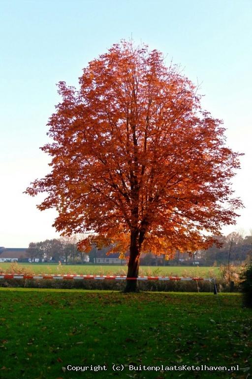 HerfstKleur.jpg